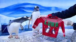 CUTE: These Festive Penguins And Louis Furroux Are The Stars Of Animals Of The