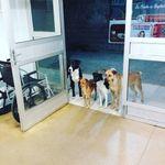 Krankenhaus: Hunde warten an der Tür – dahinter steckt berührende