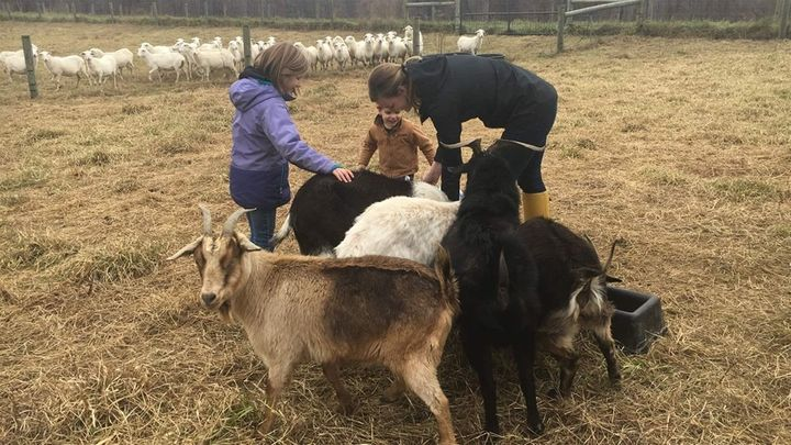 Jamie Tiralla, her daughter, Caroline, 8, and her son Isaac, 3, feed the goats.