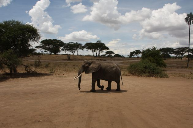 A Historic Victory For Elephants: Selling Ivory Is Now Banned In The