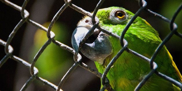 Chatty Family Parrot Exposes Husband's Affair To His Wife By Repeating Flirty