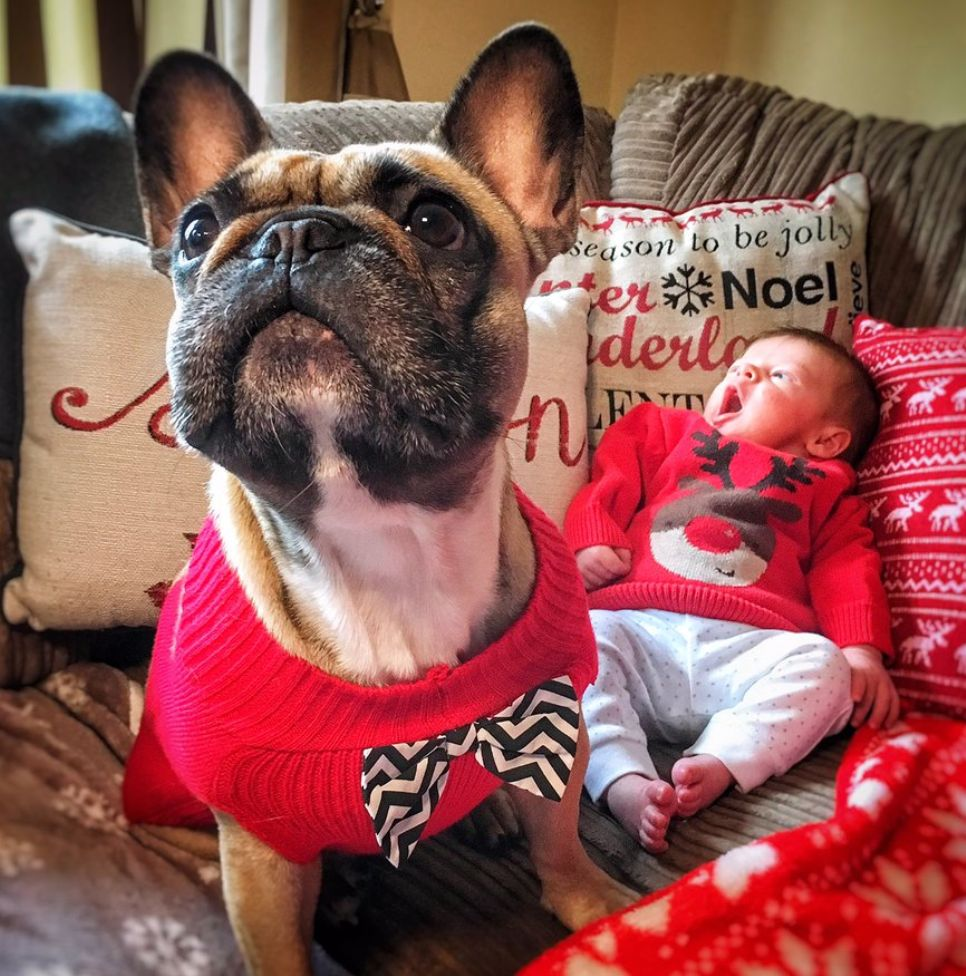 Thought Your Christmas Jumper Was The Best? Take A Look At This