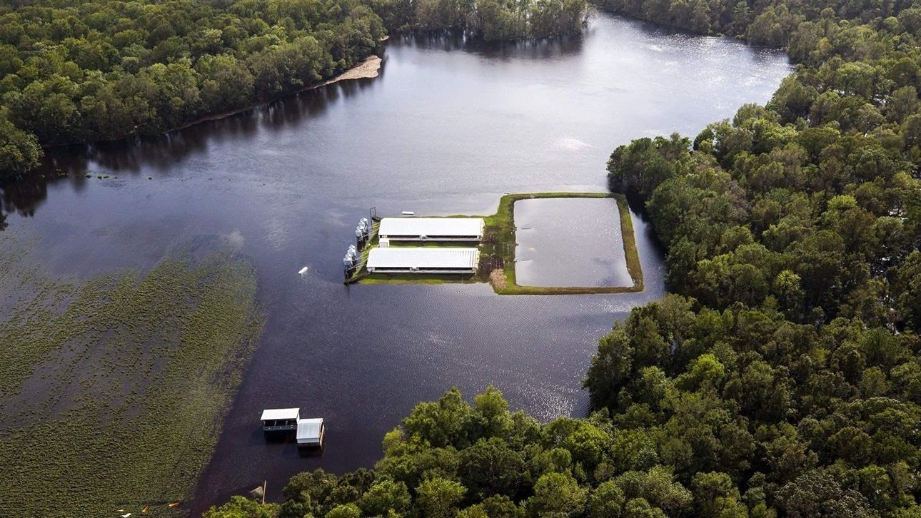 Floodwater from Hurricane Florence creeps up on hog houses and a lagoon where hog waste is stored. At least 33 such lagoons overflowed during the floods.