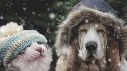 Πώς ξέρετε αν το κατοικίδιό σας κρυώνει