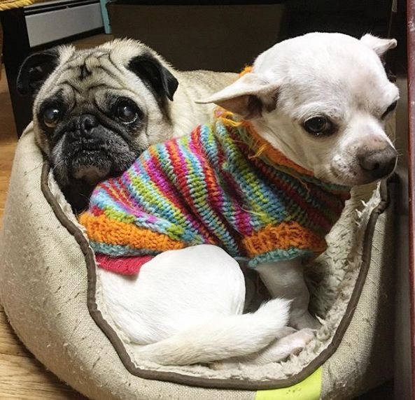 Pet Retirement Home Rescues Dogs In Their Golden