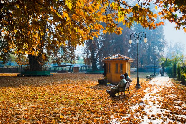 The Chinar Bagh in Jammu and