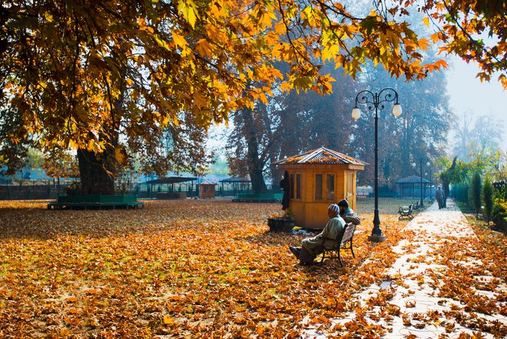 The Chinar Bagh in Jammu and Kashmir.