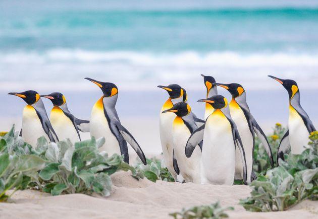 Θαλάσσια λιοντάρια και πιγκουίνοι: Αυτό το νησί πωλείται μαζί με τους «κατοίκους»