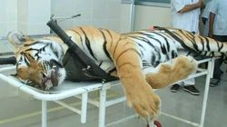 Tigress Avni's Killing A 'Ghastly Murder' By A 'Criminal': Maneka