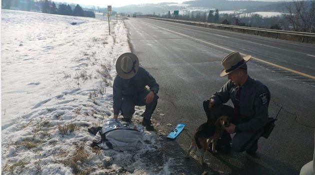 Zwei Polizisten versorgten die beiden Hunde.