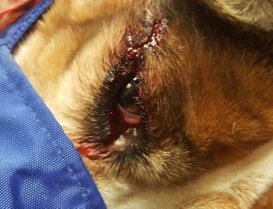 Troopers Auge war ebenfalls schwer verletzt.
