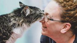 Καναδάς: Ο γάτος που ταξίδευσε 1.200 χιλιόμετρα μέσα σ' ένα