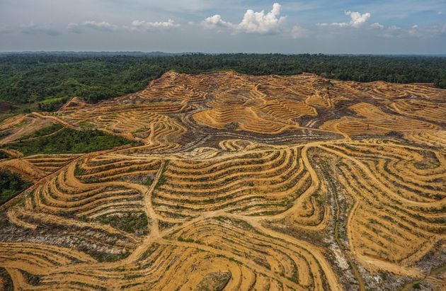 An illegal palm oil plantation is seenin Aceh, Indonesia, shortly after its creation in