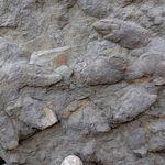 Βρετανία: Ανακαλύφθηκαν καλοδιατηρημένες πατημασιές δεινοσαύρων ηλικίας 100 εκατ.