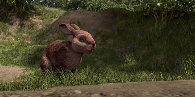 Watership Down': 18 Facts You Didn't Know About The New
