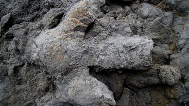 영국에서 1억년 전에 찍힌 공룡 발자국이