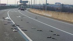 장어 수백 마리가 자동차 전용도로에 쏟아져 잠시 난리가