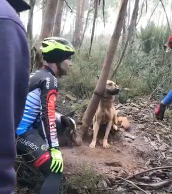 Radfahrer finden gefesselten Hund im Wald – er wurde zum Sterben