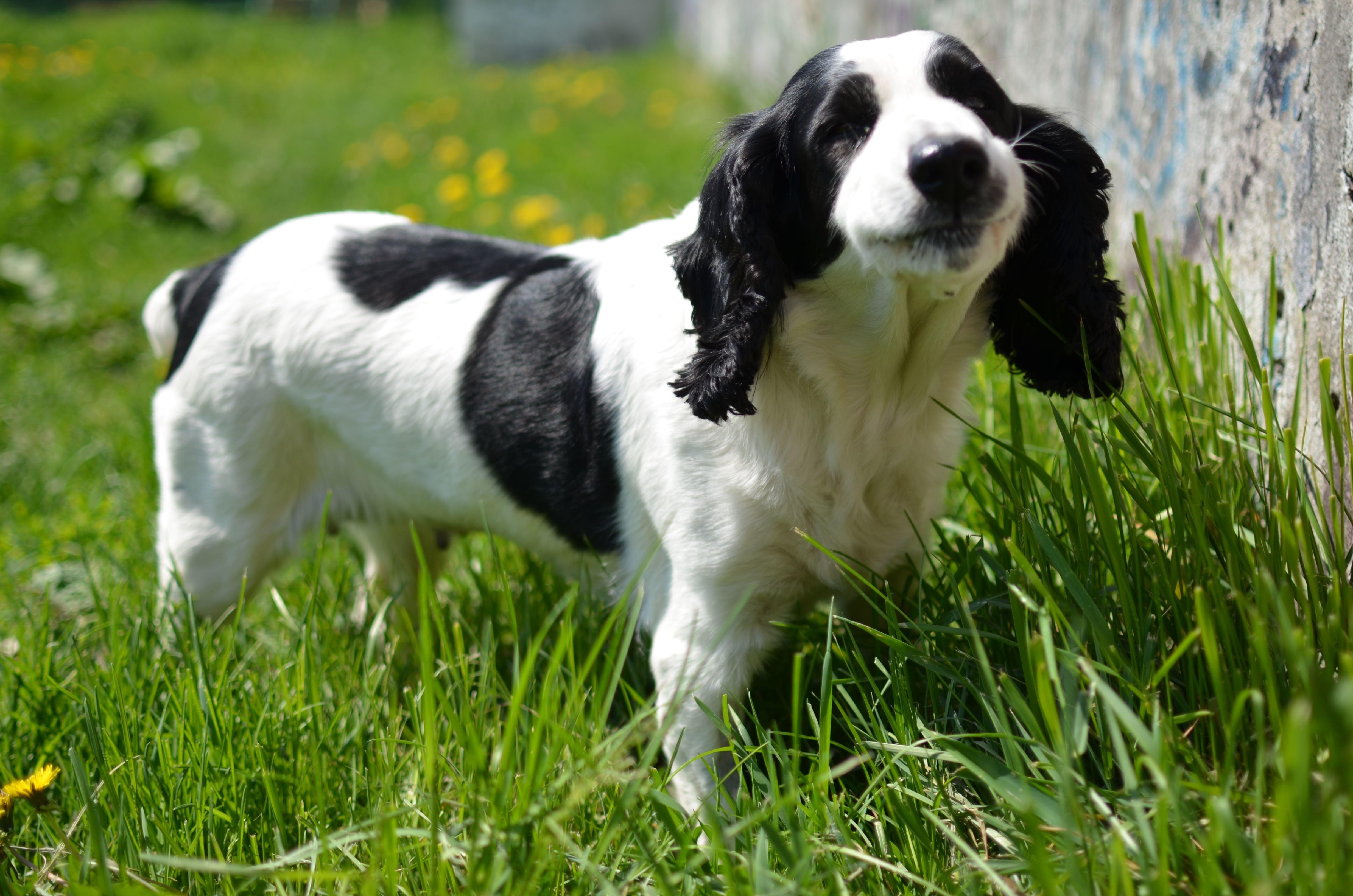 Hund leckt immer wieder an seiner Besitzerin und rettet ihr so das