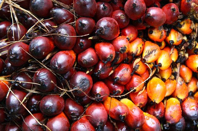 Palm oil is the most produced, consumed and traded vegetable oil in the