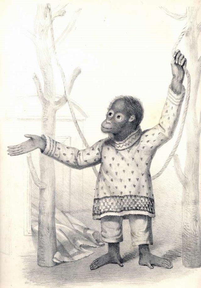 오랑우탄 제니의 특별한 행동이 찰스 다윈에게 영감을