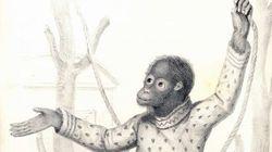 오랑우탄 제니와 찰스 다윈의 만남이 세상에 충격을