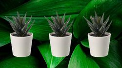 The Best Fake Plants That Don't Look
