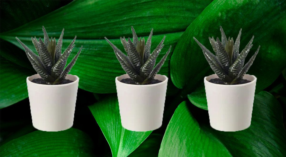 The Best Fake Plants That Don T Look Naff Huffpost Uk Life