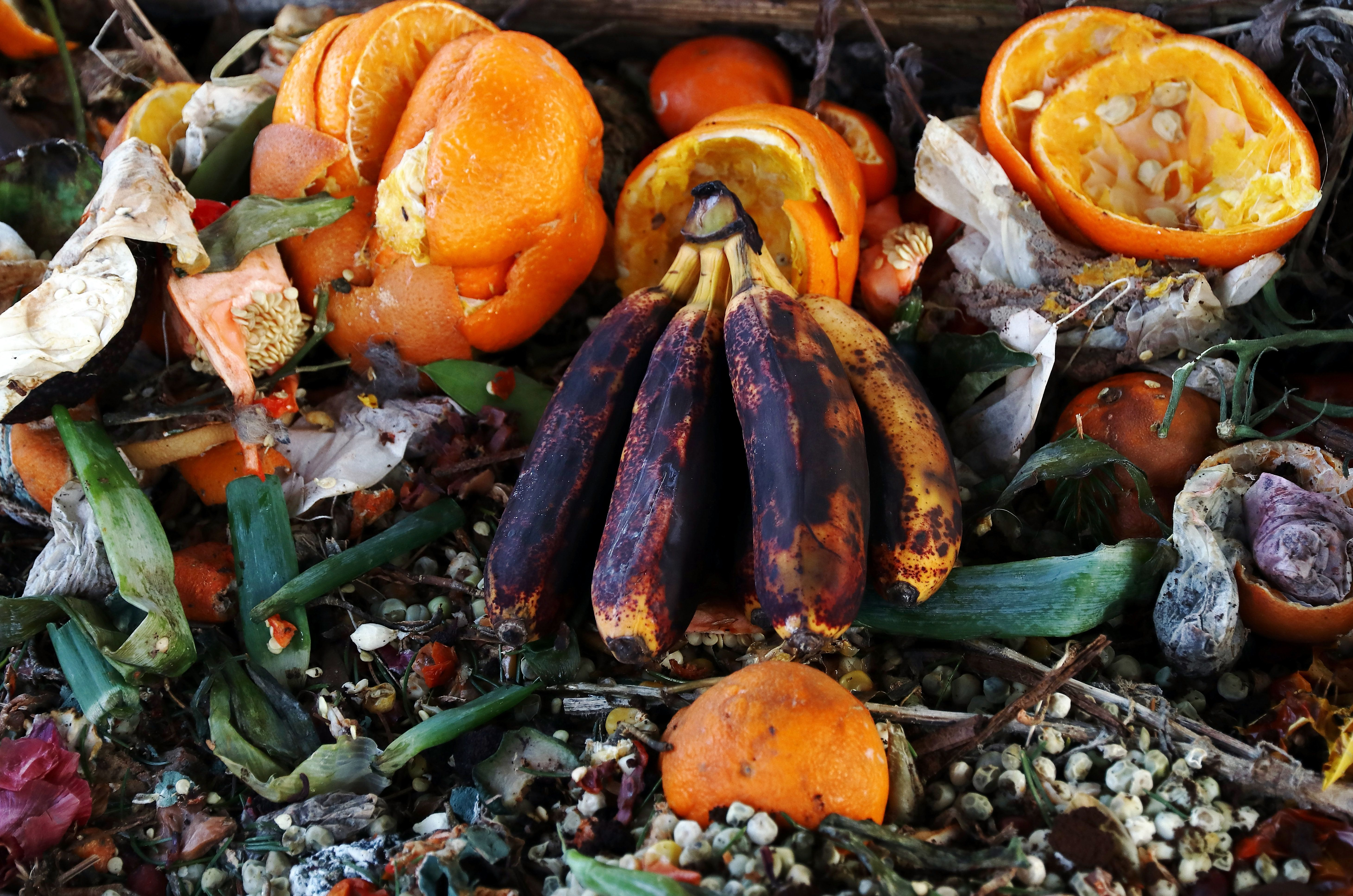 In the U.S., nearly half of all food produced is wasted.