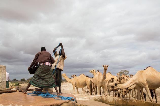Eine Szene aus Kenia: Hier kämpfen die Menschen gegen
