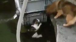Katze ist in Teich gefangen – dann wird ein Hund zum