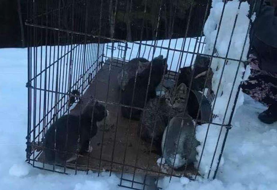 12마리의 새끼 고양이들이 눈 속에 버려져 있었다