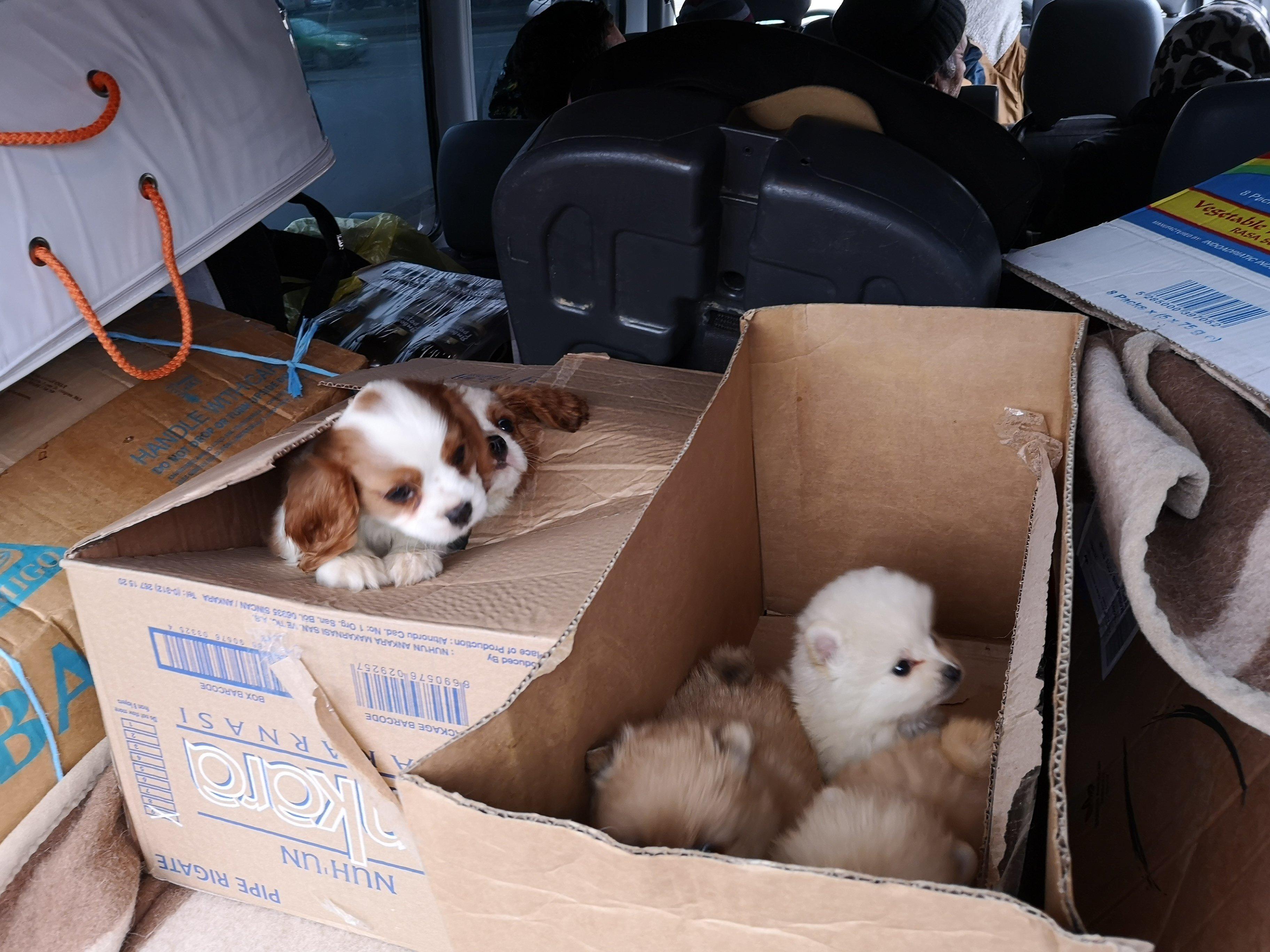 Hunde: Polizisten stoppen Sprinter in Hannover – und retten acht