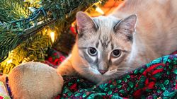 The Importance Of Protecting Your Pets From Christmas