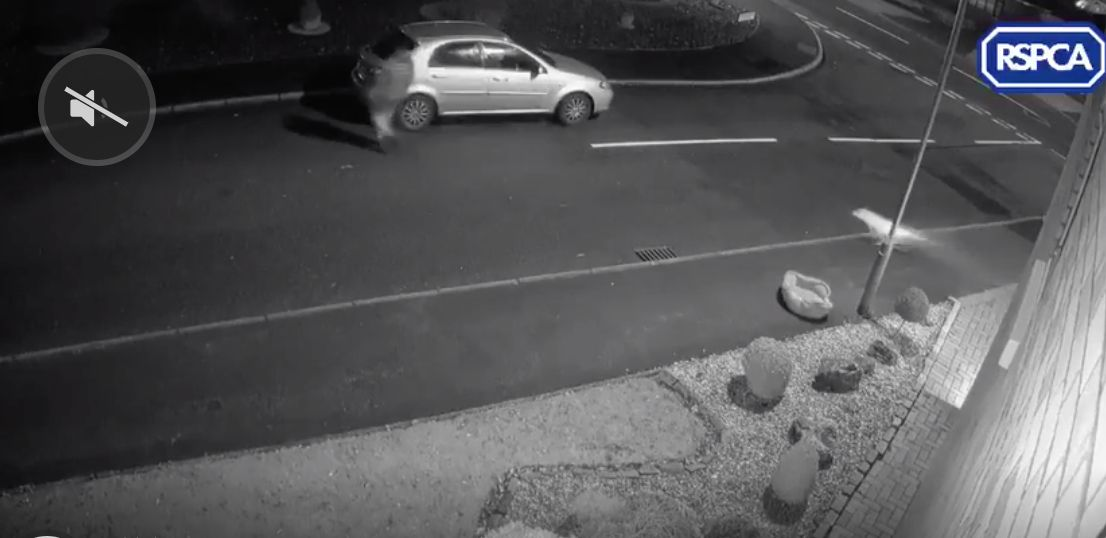 Distressing CCTV Clip Shows Abandoned Dog Desperately Trying To Get Back Into Owner's