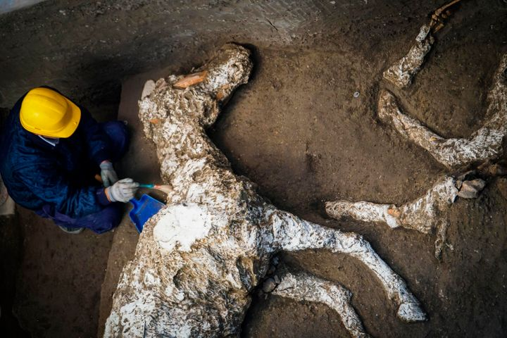 An archaeologist inspects the plaster cast of a horse at a villa outside Pompeii in Italy on Dec. 23.