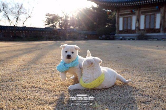 북한에서 온 곰이가 낳은 6마리 강아지의 근황이