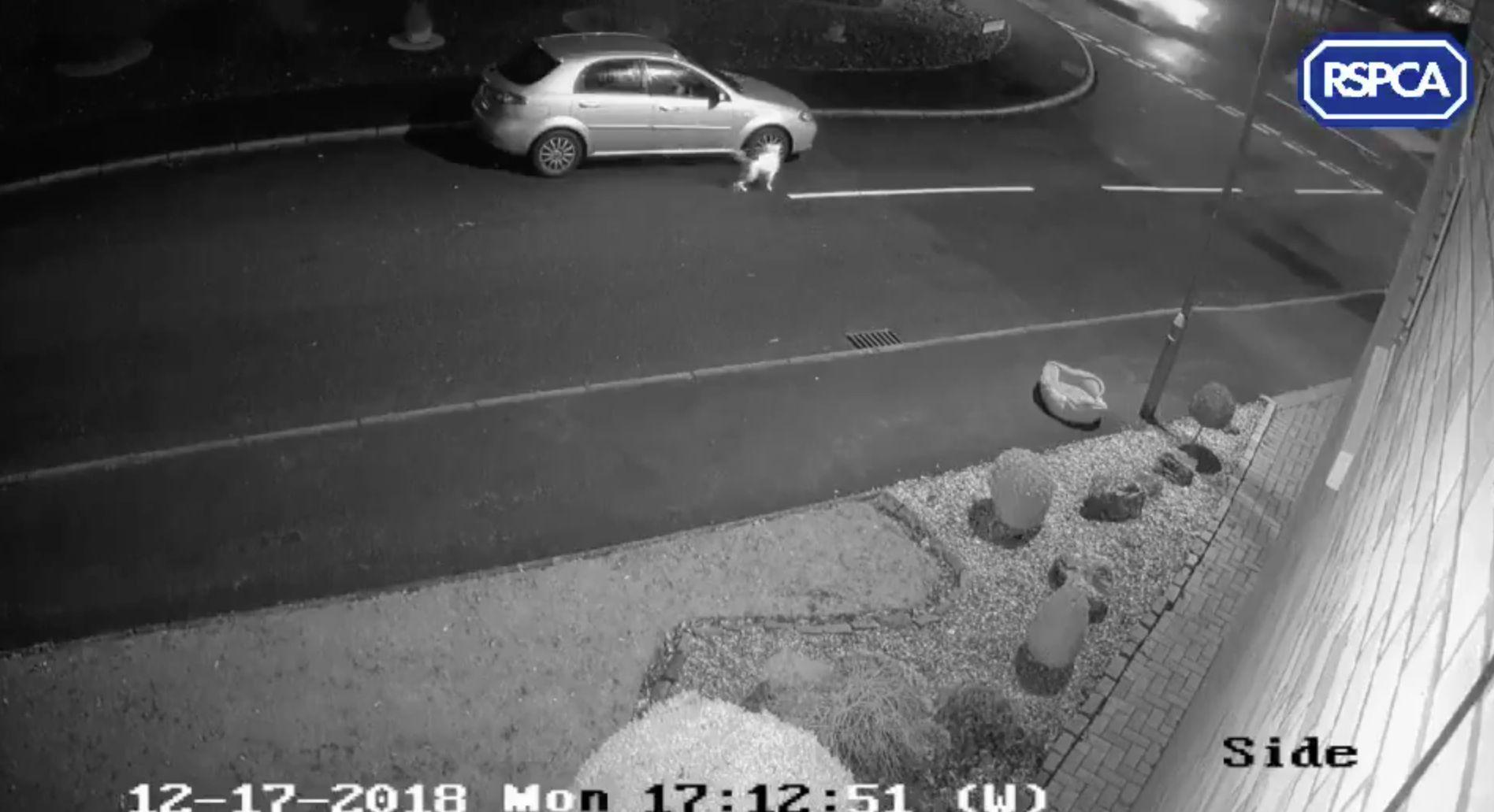 Mann setzt seinen Hund aus –Überwachungskamera fängt das Elend des Tieres