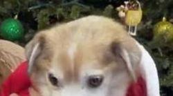 Dieser Hund wurde ohne Nase geboren – so geht es ihm