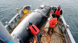 Η Ιαπωνία αρχίζει ξανά τη φαλαινοθηρία για εμπορικούς