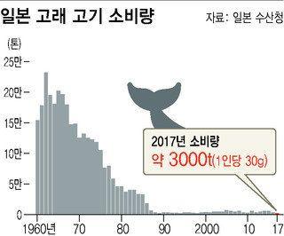 일본, 반발 무릅쓰고 30년 만에 상업적 고래잡이