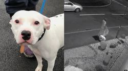 영국 거리에서 개를 버린 사람의 모습이