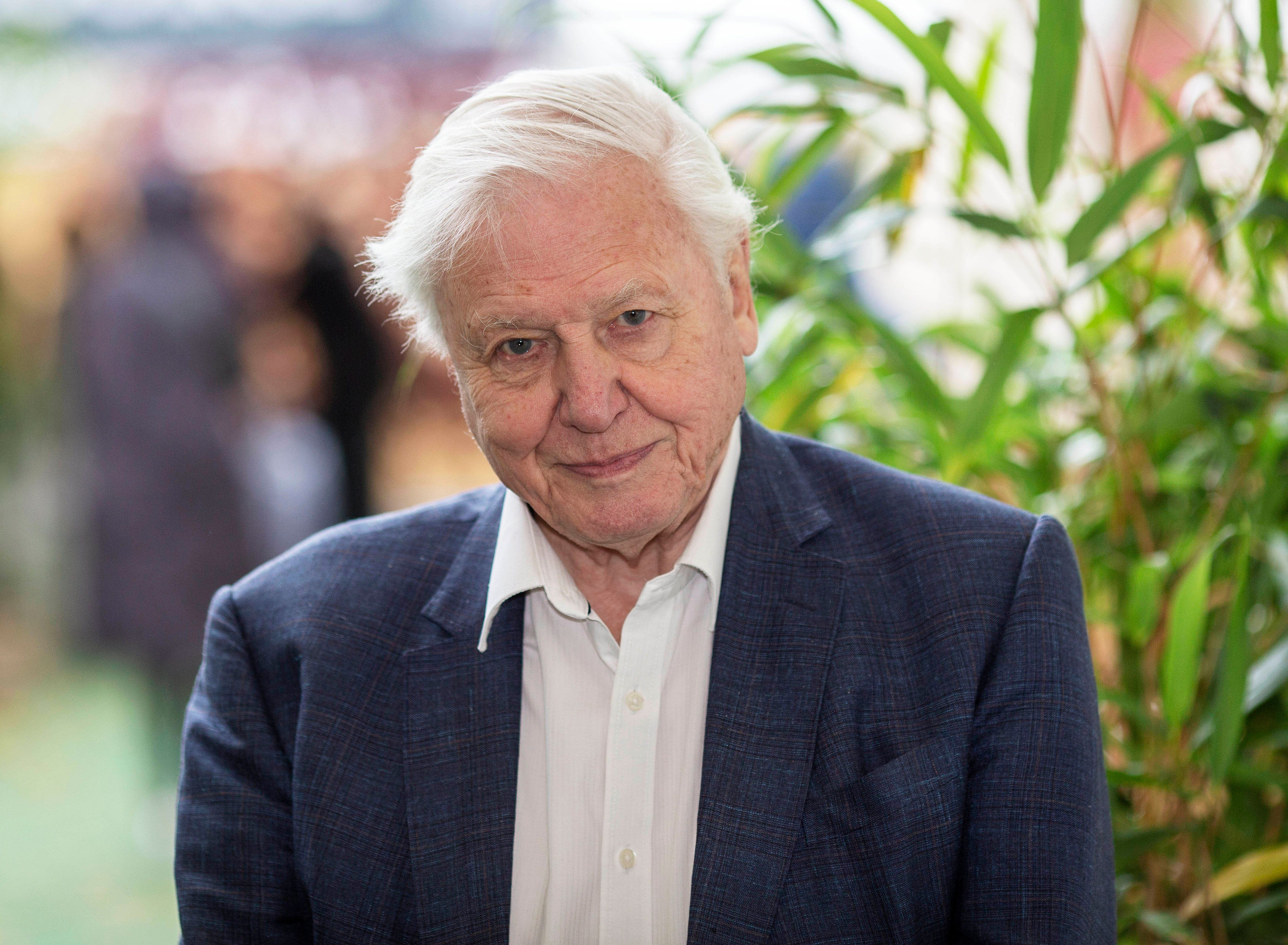 David Attenborough Has 'Hope' For The Planet, But Only If Humans Become Less