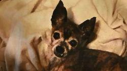 ΗΠΑ: Πέταξε τα σκυλιά της γυναίκας του από το μπαλκόνι επειδή τα