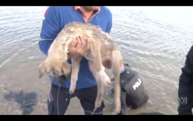 Der Hund konnte in letzte Sekunde gerettet