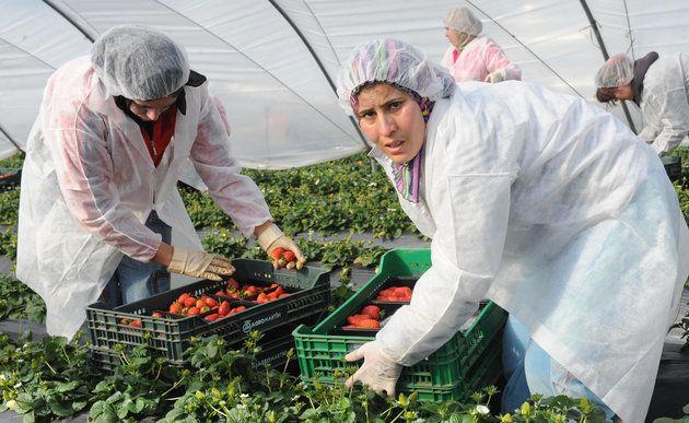 Ouvrières saisonnières de Huelva: Le recrutement désormais ouvert aux femmes