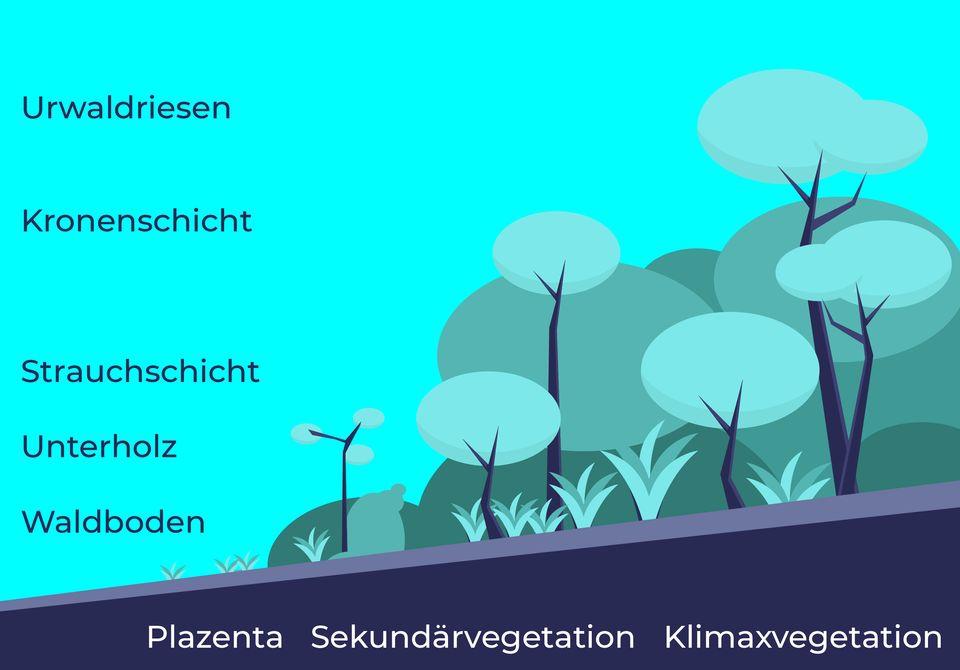 Die Sukzessionsstufen eines Regenwaldes im Laufe der Zeit. Jede davon hat eigene Pflanzensorten und andere angekoppelte landwirtschaftliche Produkte.