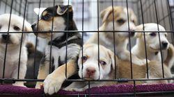 캘리포니아에서는 구출된 동물만 반려동물로 팔 수 있게
