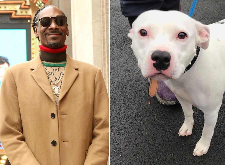 Snoop Dogg Offers To Rehome Abandoned Staffie Snoop (The