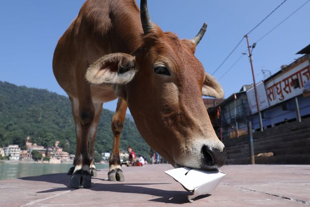 Twitter Calls Out Yogi Adityanath Govt's New 'Gau Kalyan'